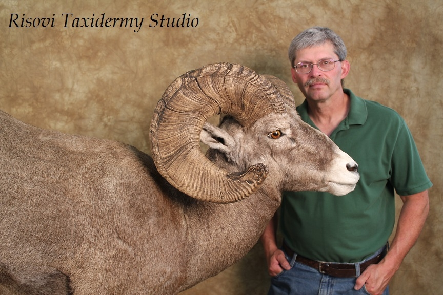 taxidermy studio risovi taxidermy studio gallery nd taxidermy north dakota